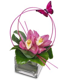 The perfect gift for an orchid lover!