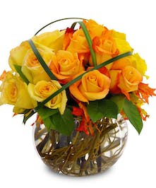 Autumn Roses Trumbull & Shelton (CT) Same-day Delivery