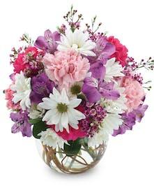 White Daisies Trumbull & Bridgeport (CT) City Line Florist