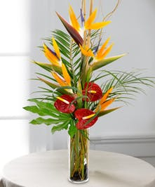 Birds of Paradise and red Anthurium stand tall in this tropical delight!