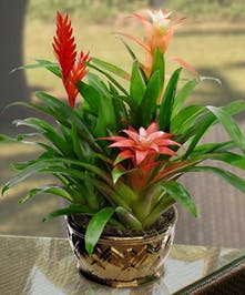 3 Bromeliads Planted Together!