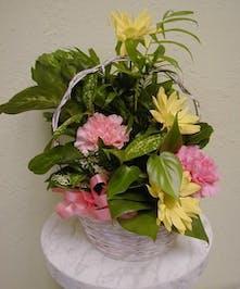 Dish Garden with fresh cut flowers added