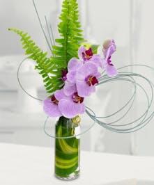 Phalaenopsis Orchid Bud Vase