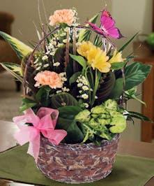 Attractive Indoor Garden Plants