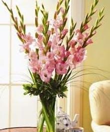 Vased Pink Gladiolus