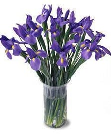 Glass vase filled with just fresh cut Iris