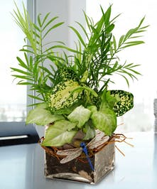 Give thanks with our easy care green garden, fit to make the office more inspirational!