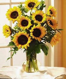 Just look at all these beautiful Sunflowers!
