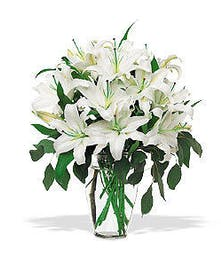 Enchanting White Oriental Lilies
