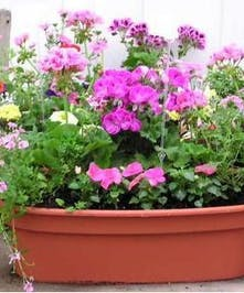 Assorted, colorful outdoor plants