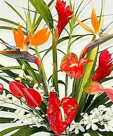 A tropical designed bouquet in your price range