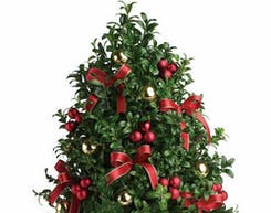 Wreaths & Boxwood Trees