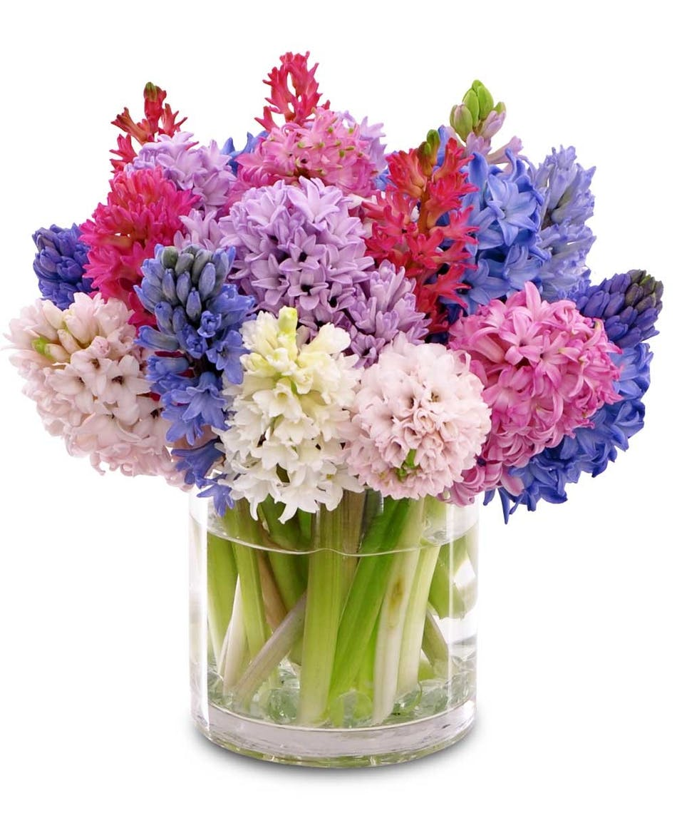 Hyacinth Vase: This colorful assortment of hyacinths is perfect for ...