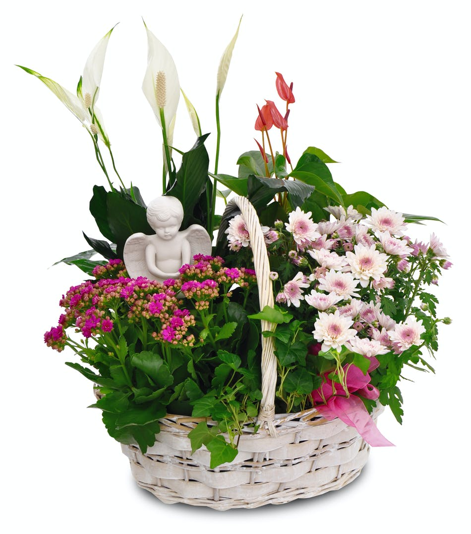 This garden inspired blooming plant basket combines the season's premium blooming and green plants in a charming wicker basket.