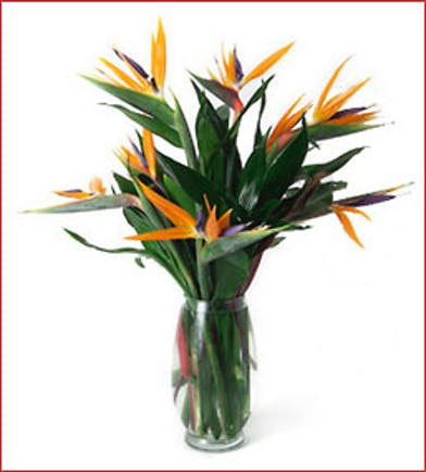 birds of paradise birds available same day flower delivery to