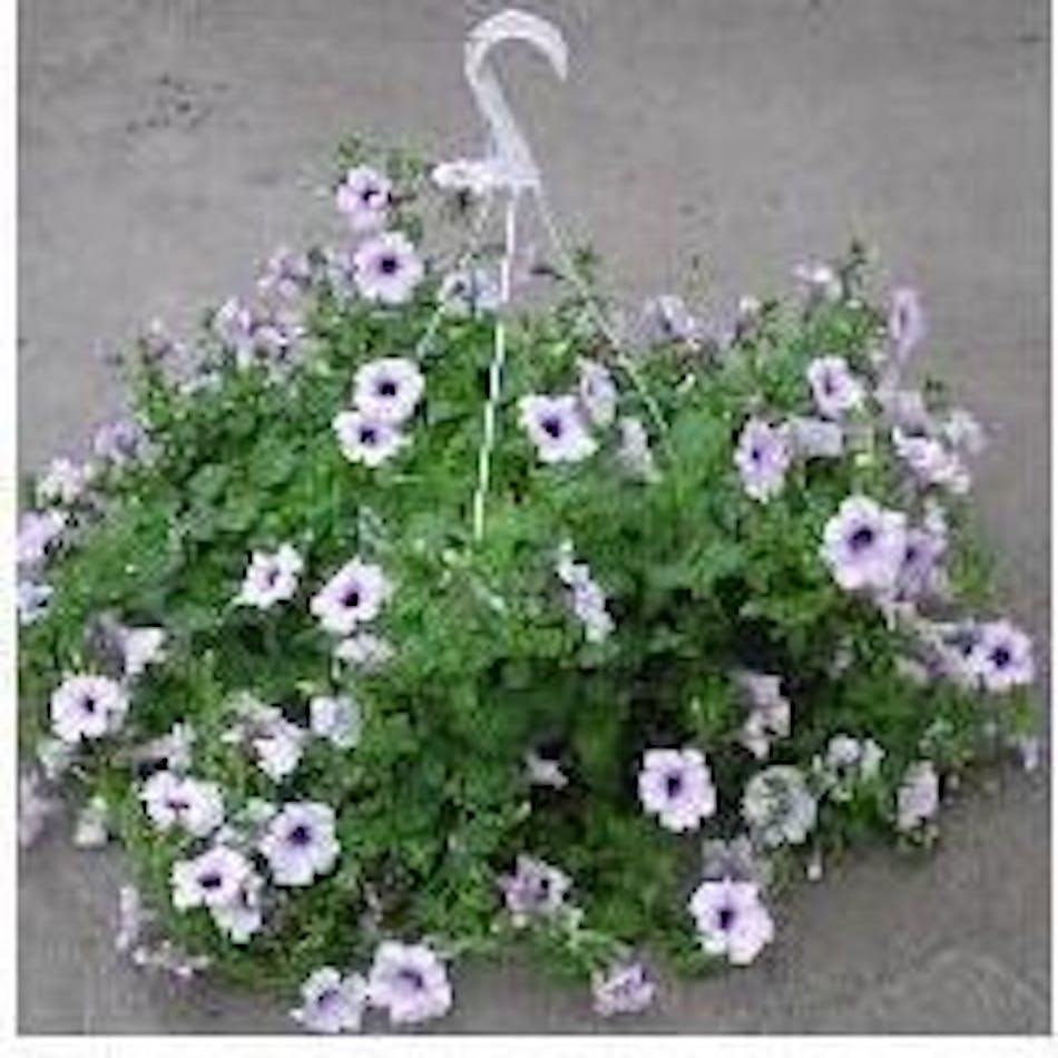 Hanging plant flowering available same day flower delivery to delivery today available order within izmirmasajfo