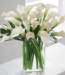 Lux Calla Lilies