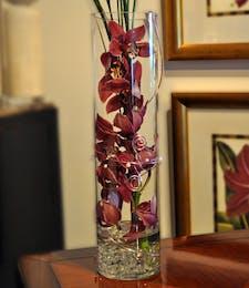 Purple Zensational Orchids